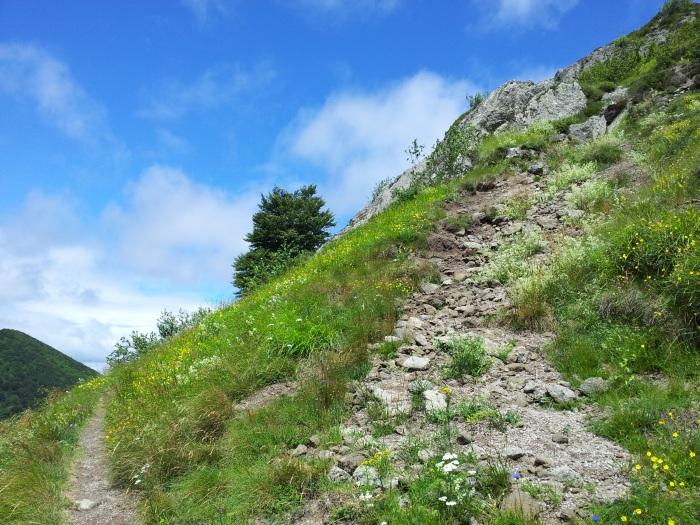 Chemin Volcans d'Auvergne